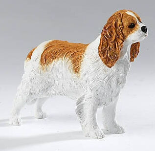 Country Artists Cavalier King Charles